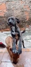 Urgente!!!! Doação de cachorro