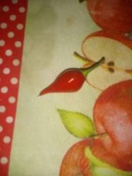Vendo Pimenta Biquinho
