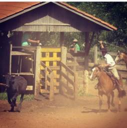Torrando Cavalo de laço