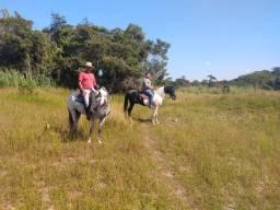 Cavalgadas,cursos de equitação e doma