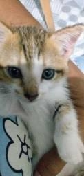 Belinha,gatinha filhote para adoção responsável