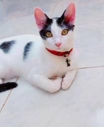 Gatos (Fêmea Branca e Preta) (Macho Branco e Laranja)