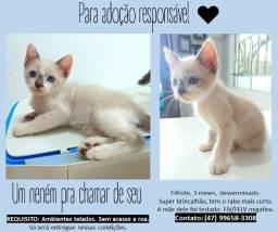 DOAÇÃO filhote gato - adoção responsável