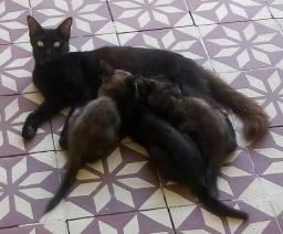 Gatos e Mãe para adoção