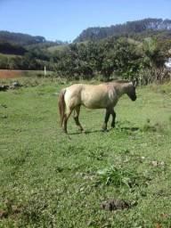 Cavalo crioulo barato