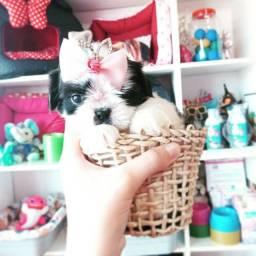O presente encanta!!!! Shih tzu  mini