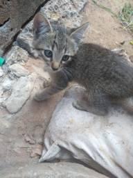 Gatos filhotes para doar