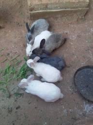 Lindos coelhinhos sendo 6 machos 3 femeas ja no ponto de procriar