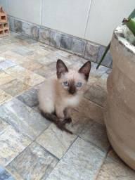 Filhotes de gato para adoção