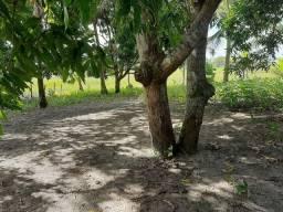Sitio  próximo passo de camarajibe Fica no local conhecido como ilha