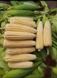 Milho verde para atacado pamonharia