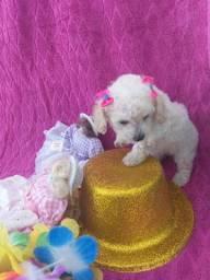 Filhote de Poodle micro toy