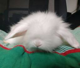 Mini Fuzzy Lop.