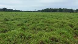 18 alqueires, com 17 aberto. 21 km de Guarantã do Norte -MT