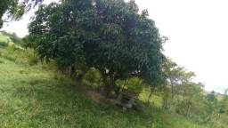 Linda chácara em remigio-pb, distante da br 600mts