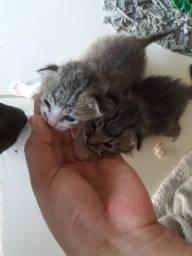 Doando 2 gatinhos