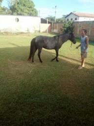 Égua 10 anos preta