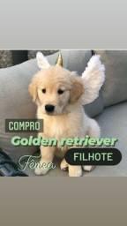 Golden Retriever (leia a descrição)