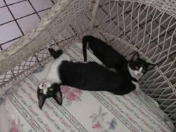 Gatos para doação responsável