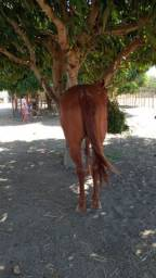 Égua de esteira