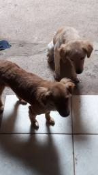 Adoção Ayla e Cacau - vira latas - Mãe e Filha