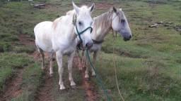 Cavalos Mansos