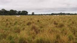 Fazenda em Barra do Ouro - TO