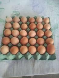 Vendo ovos galados . Embrapa
