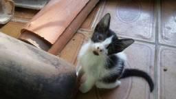 Gatinha para adoção - 2 meses - Fêmea