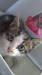 DOAÇÃO Gato filhote
