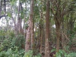 Área de terras com eucalipto, bom acesso, Fraga Caraá