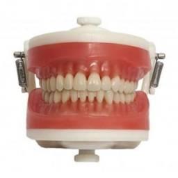 Manequim Dentística Odontológico - Pronew