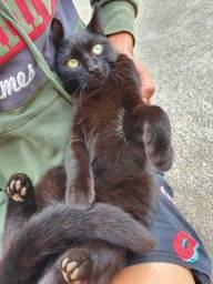 Doação dessa linda felina cor preta castrada