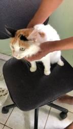 gatos castrados e vacinados para adoção