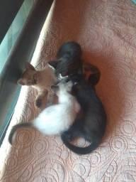 Doação de gatos!!!!