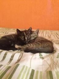 Doação de Gatinhos bonitinhos
