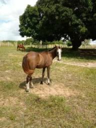 Vendo cavalo, super manso. Ja levou sela, mas so minha filha montou