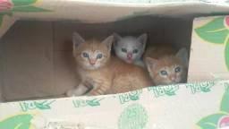 Gatinho para adoção, gata branca, gato amarelo, filhote de gato