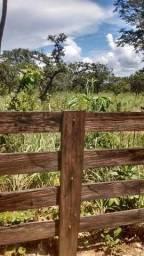 Oportunidade venda de fazenda na cidade de Uruaçu