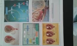 Conjunto completo de apostilas do Intensivão Medgrupo 2014