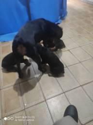 Filhotes com dois meses