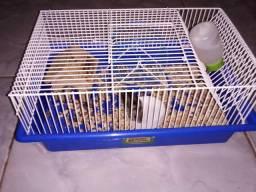 Hamster fêmea anao russo