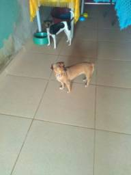 Doações de uma cadela