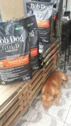 Ração Bob Dog Gold