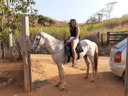 Cavalo De serviço