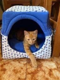Casa de Gato ou Cão