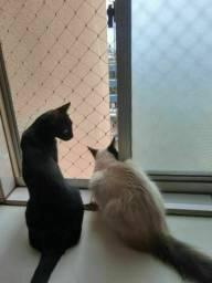 Rede de proteção pra gatos *