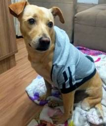 Blusão Moletom para Dogs