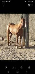 Cavalo #poltro