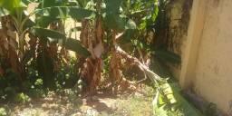 Doa-se bananeiras